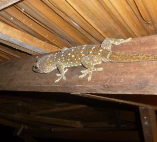 Tokeh Gecko Lake View Bungalows