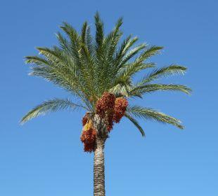 Eine Palme wächst in den Himmel Hotel Horizon Beach Resort