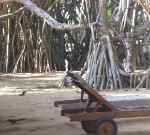 Vor unserem Bungalow Hotel Ranweli Holiday Village