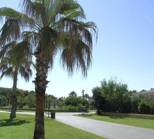 Palme an der Prominade Side Sun Bella Resort & Spa