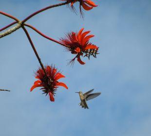 Im Garten - Kolibri Hotel Costa Linda