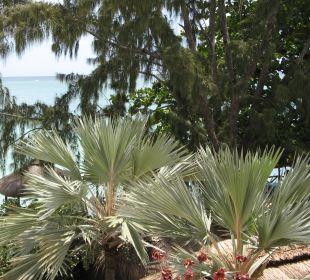 Vom Zimmer Coral Azur Beach Resort