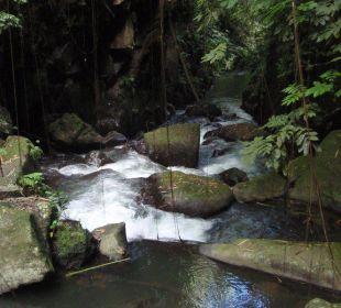 Fluß Hotel Nandini Bali Jungle Resort & Spa