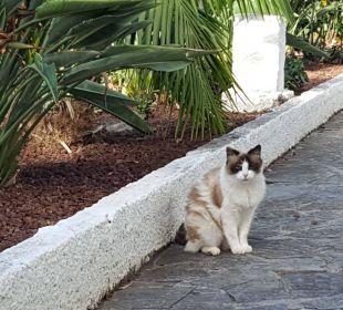 Katze des Ambassadors... Apartments Ambassador