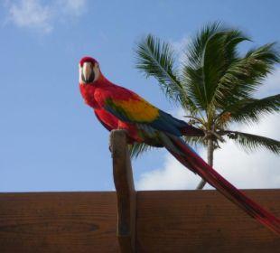 Hotel-Papagei VIK Hotel Cayena Beach Club