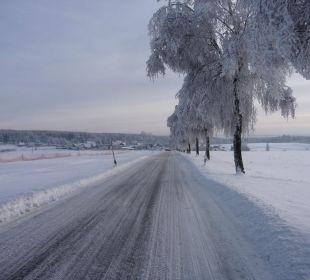 Birkenallee im Winter Gasthof Brauner Hirsch Sophienhof