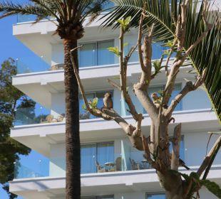 Erst Ende Februar fertig geworden- neue Fassade! Hotel Playa Esperanza