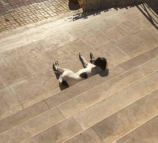 Auch Hunde brauchen eine Pause  Hotel Titan Select