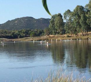 Blick zu den Flamingos  Sardafit Ferienhaus Budoni