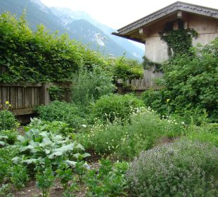Kräutergarten- auch für unsere Gäste Pension Schottenhof