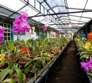 Orchideen Hotel Hacienda San Jorge