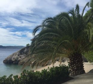 Palmen über Palmen Bluesun Hotel Soline