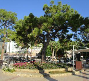 Baum neben der Beachbar Kilikya Palace Göynük