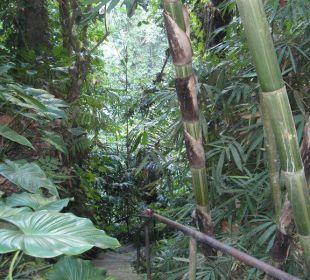Die Megatreppe Hotel Nandini Bali Jungle Resort & Spa