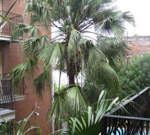 Palmen im Innenhof