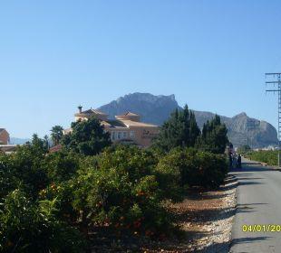 Blick von den Mandarinen übers Haus  Hotel Los Caballos