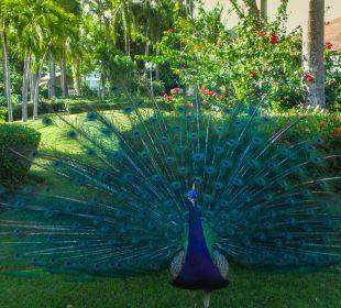 Ein Bewohner  Hotel Vista Sol Punta Cana