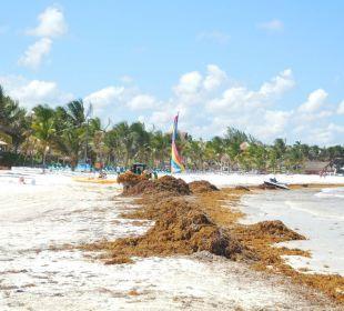 August 2015 Secrets Maroma Beach Riviera Cancun