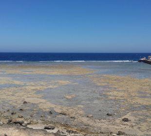 Blick auf das rote Meer TUI MAGIC LIFE Kalawy