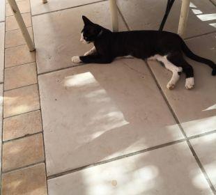 Eine von vier oder fünf Hauskatzen TUI MAGIC LIFE Kalawy
