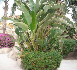 Strelizien Stella Di Mare Beach Resort & Spa Makadi Bay