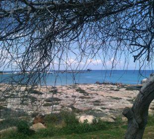 Gartenanlage mit Liegebetten Hotel Mimosa Beach