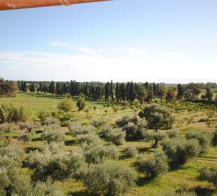 Meersicht über Olivenhain hinweg Holiday Residence Rifugio