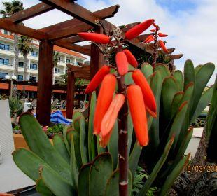 Schöner Garten mit Außenpool Galo Resort Galosol