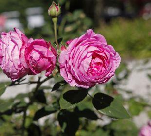 Das Hotel Stefaner ist von Blumen umgeben Naturpark Hotel Stefaner