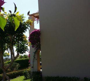 Garten TUI MAGIC LIFE Kalawy