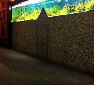 Aquarium und LEDs im Boden Parkhotel Frank