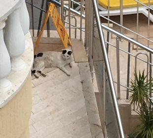 Zwei kleine Katzen aber sie tuen nichts Hotel Artemis Princess