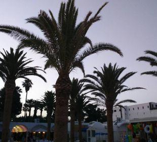 Palmen direkt neben der Animations-Bühne Hotel Samira Club