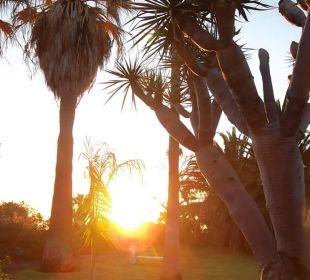 Kühl am Dezembermorgen - aber herrlich Hotel La Palma Jardin