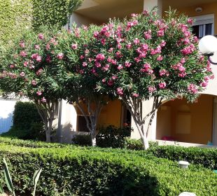 Oleander  Vantaris Beach Hotel