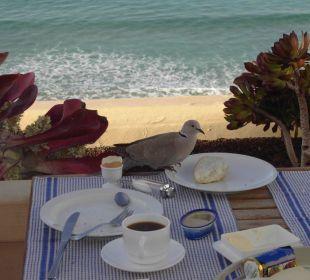 Unser alltäglicher Frühstücksgast Hotel Rocamar Beach