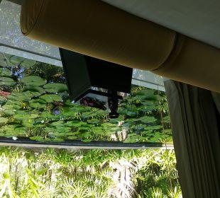 Zimmer Hotel Banyan Tree Phuket