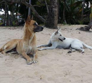 Hunde am Strand  Grand Bahia Principe El Portillo