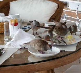 Das Vogelproblem  Paradise Cove Boutique Hotel