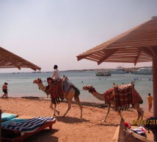 Strand SUNRISE Select Royal Makadi Resort