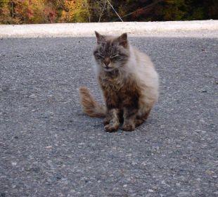 Katze vom Hof Oberversanthof