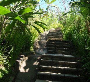 Weg von Rezeption zu der Anlage Hotel Nandini Bali Jungle Resort & Spa