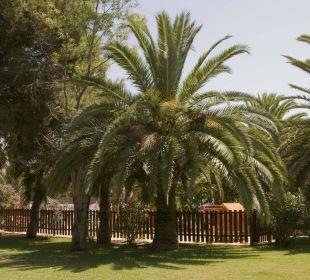 Garden OLA Aparthotel Cecilia