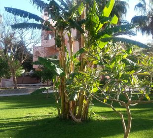 Garten Hotel Le Pacha Beach Resort