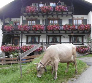 Die Kühe laufen täglich vorbei! Gästehaus Wineberger