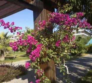 Blumen an der Promenade im November Hotel Side Crown Palace