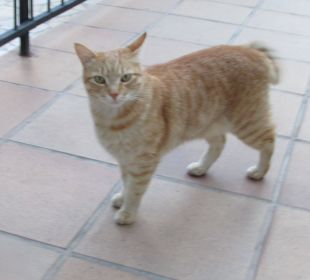 Garfield IMMER noch da  Fiesta Hotel Milord