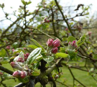 Gartenanlage NaturApartments & LandHaus Stauensfließ