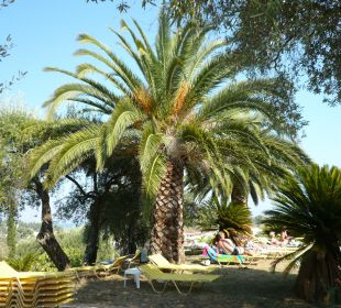 Blick auf Poolbereich Hotel Paradise Corfu