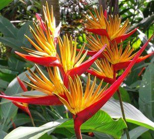 Schöne Heliconias vor dem Haus. Guest House Green Garden House